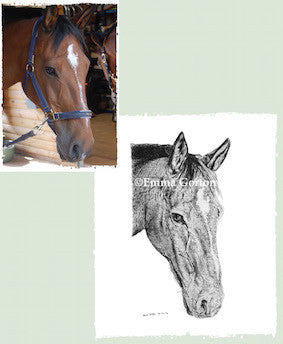 Charcoal Portrait Of Danny The Horse - From Start to Finish