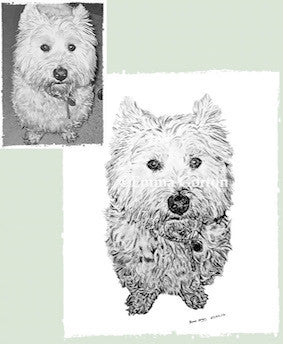 Charcoal Portrait of Gamble The Westie - From Start to Finish