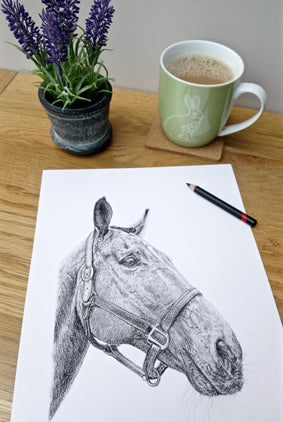 Charcoal Portrait of Pete the Horse - From Start to Finish