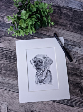Charcoal Portrait of Lola the Weimaraner - From Start to Finish