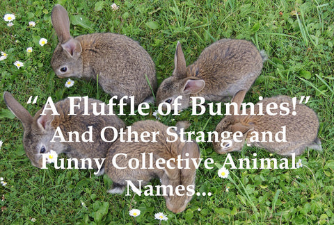 I Found Out Recently That A Group Of Rabbits Or Hares Is Sometimes Referred To As A Fluffle How Adorable Is That It Got Me Thinking About All The