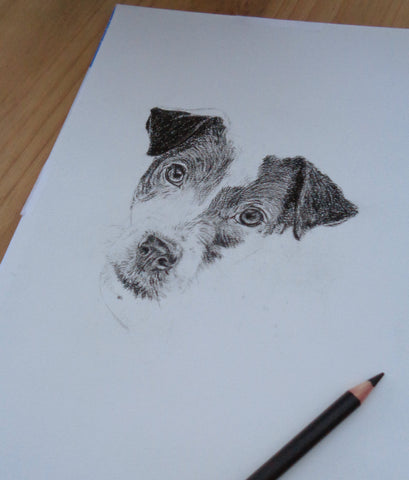 charcoal-portrait-jack-russell-5