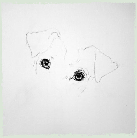 charcoal-portrait-jack-russell-3