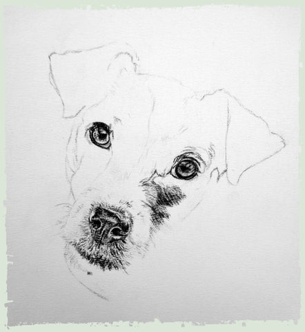 charcoal-portrait-jack-russell-4