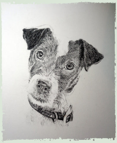charcoal-portrait-jack-russell-6