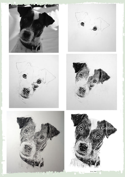charcoal-portrait-jack-russell-2