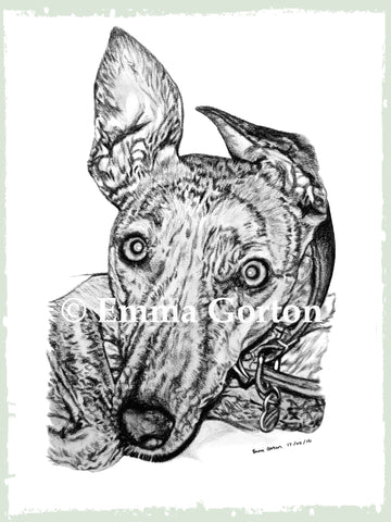 charcoal-portrait-lurcher