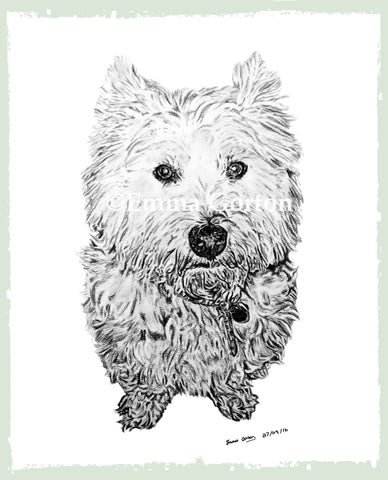 charcoal-drawing-west-yorkshire-terrier-6