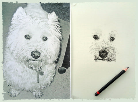 charcoal-drawing-west-yorkshire-terrier-1