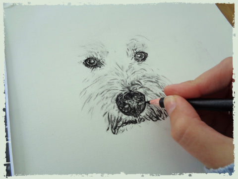 charcoal-drawing-west-yorkshire-terrier-2