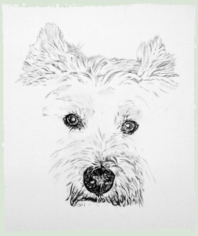 charcoal-drawing-west-yorkshire-terrier-3