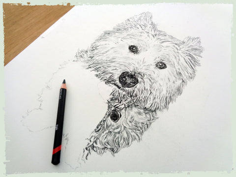 charcoal-drawing-west-yorkshire-terrier-5
