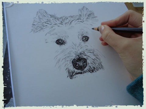 charcoal-drawing-west-yorkshire-terrier-4