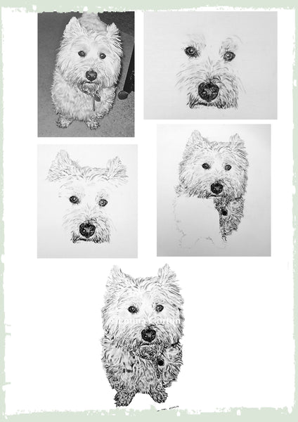 charcoal-drawing-west-yorkshire-terrier