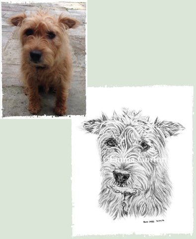 charcoal-portrait-terrier