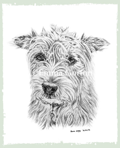 charcoal-portrait-terrier-5