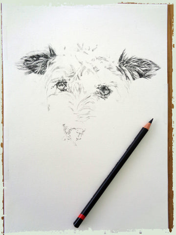 charcoal-portrait-terrier-3