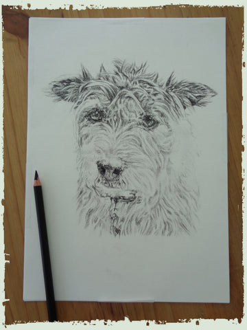charcoal-portrait-terrier-4