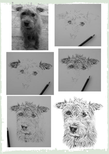 charcoal-portrait-terrier-1