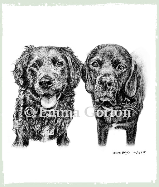 buzz-and-dory-labrador-portrait-glos