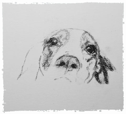 charcoal-portrait-basset-hound-border-collie-10