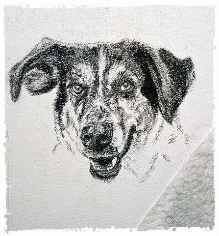 charcoal-portrait-basset-hound-border-collie-3