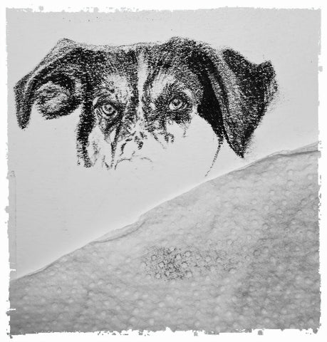 charcoal-portrait-basset-hound-border-collie-5