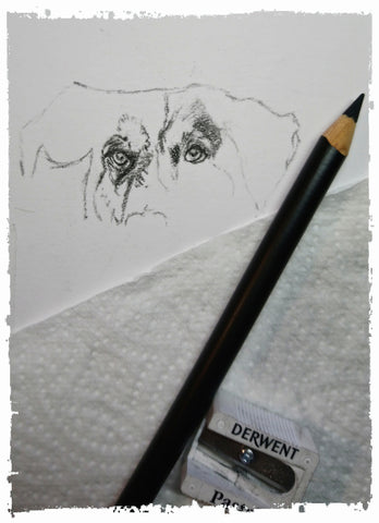 charcoal-portrait-basset-hound-border-collie-6