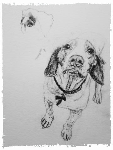 charcoal-portrait-basset-hound-border-collie-7