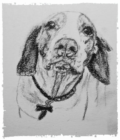 charcoal-portrait-basset-hound-border-collie-8