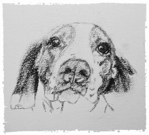 charcoal-portrait-basset-hound-border-collie-9