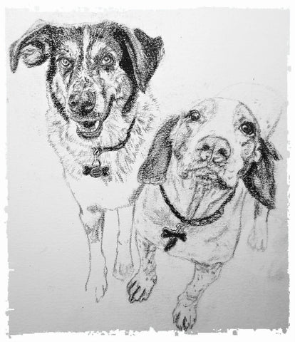 charcoal-portrait-basset-hound-border-collie