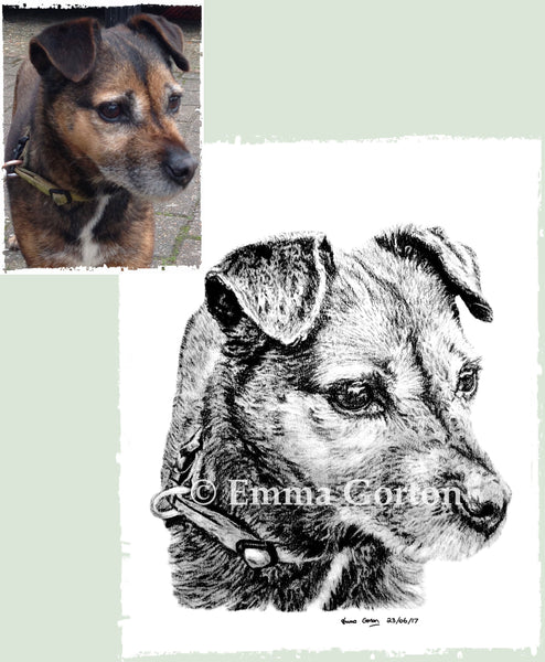 charcoal-portrait-border-terrier-2