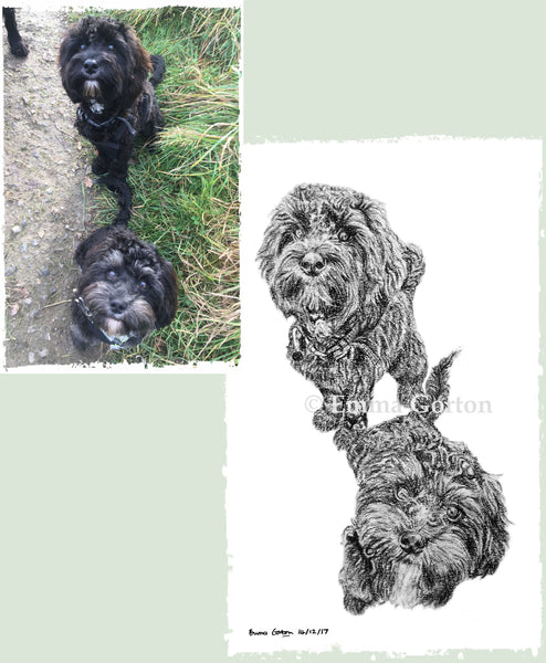 charcoal-portrait-cockerpoo-hadley-and-hudson-1