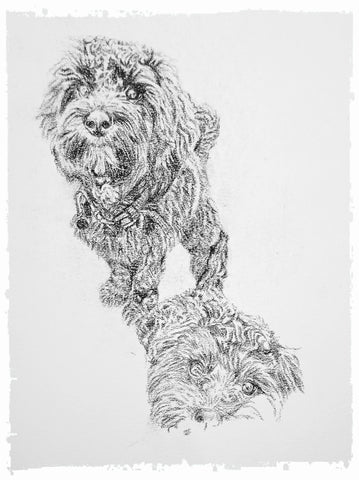 charcoal-portrait-cockerpoo-hadley-and-hudson-3