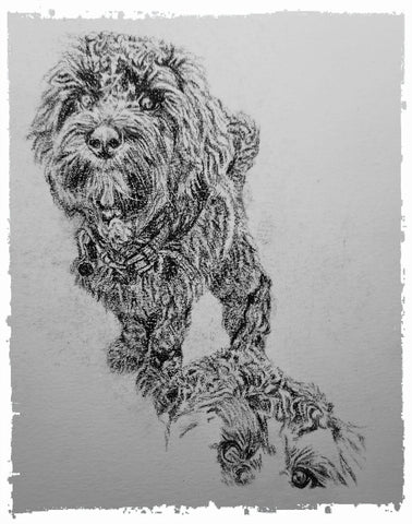 charcoal-portrait-cockerpoo-hadley-and-hudson-4