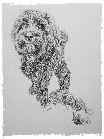 charcoal-portrait-cockerpoo-hadley-and-hudson-5