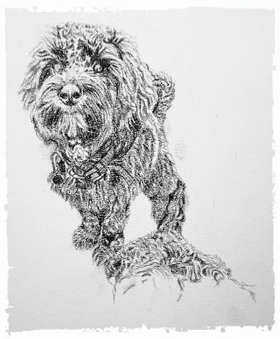 charcoal-portrait-cockerpoo-hadley-and-hudson-6