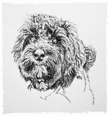charcoal-portrait-cockerpoo-hadley-and-hudson-7