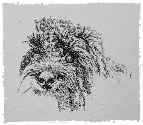 charcoal-portrait-cockerpoo-hadley-and-hudson-8
