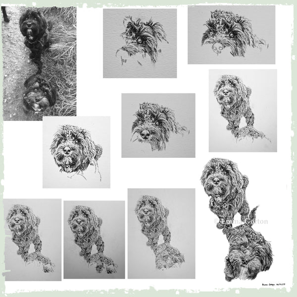 charcoal-portrait-cockerpoo-hadley-and-hudson