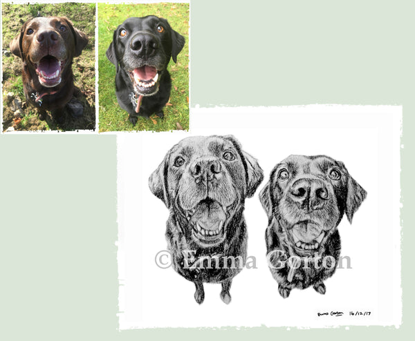 charcoal-portrait-labrador-bella-and-tess-1