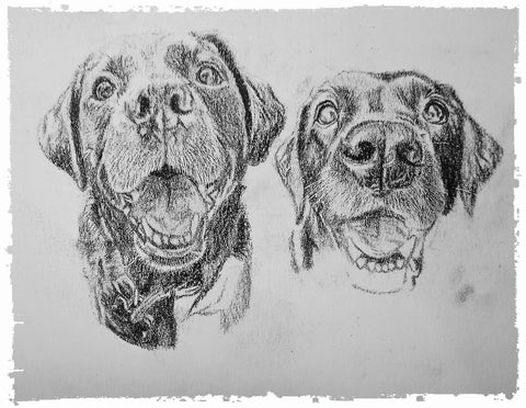 charcoal-portrait-labrador-bella-and-tess-3