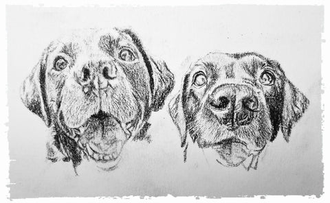 charcoal-portrait-labrador-bella-and-tess-4