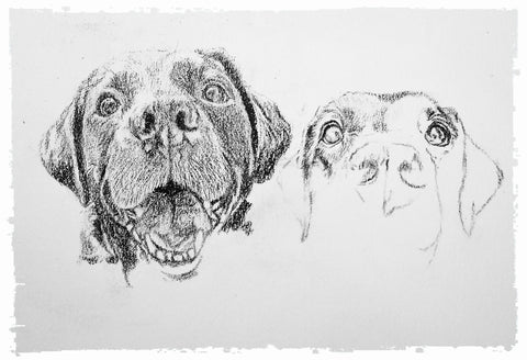 charcoal-portrait-labrador-bella-and-tess-5