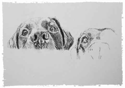 charcoal-portrait-labrador-bella-and-tess-7