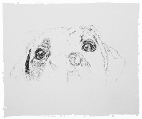 charcoal-portrait-labrador-bella-and-tess-9