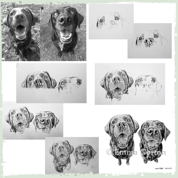 charcoal-portrait-labrador-bella-and-tess