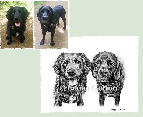 charcoal-portrait-labrador-buzz-and-dory-1