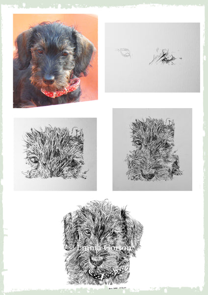 charcoal-portrait-mable-terrier-5